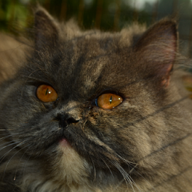 Sun Bathing by Nasr Qureshi - Animals - Cats Portraits ( cat, cat eyes, thinking, shadow, wiskers, sun bathing, black cat, eyes,  )