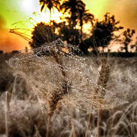 by Abdul Rehman - Instagram & Mobile iPhone