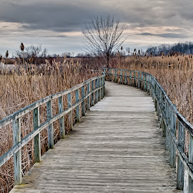 by Dragos Tranca - Landscapes Waterscapes ( wooden, hdr, waterscape, path, boardwalk )
