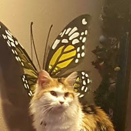 Purrrfect  by Molly Swoboda - Instagram & Mobile Android ( calico, butterfly, pose, cat, trunk )