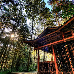 Bamboo Forest by Gema Goeyardi - City,  Street & Park  City Parks ( japan, forest )