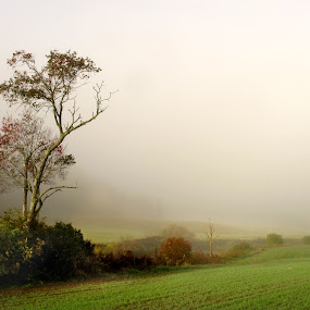 Lone Tree in the Mist by Dorothy Koval - Landscapes Prairies, Meadows & Fields ( field, foliage.branches, lone tree, riverside, fog, farmland, vermont, mist, Tree, Nature, Sky )