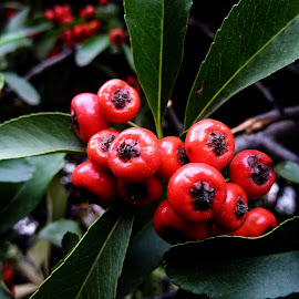 red on green by Bane Radulovic - Nature Up Close Other plants