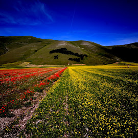 Colors in the wild by Bruno Brunetti - Landscapes Prairies, Meadows & Fields ( umbria, norcia, flowers, italy, castelluccio,  )