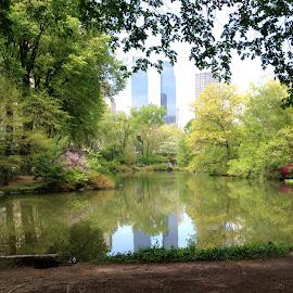 Central Park  by Arthur Clark - Buildings & Architecture Other Exteriors