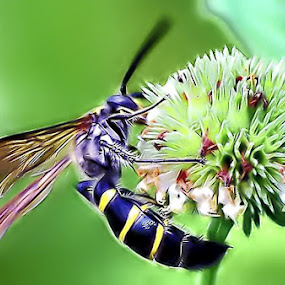 honey by Enggar Rizky - Animals Insects & Spiders