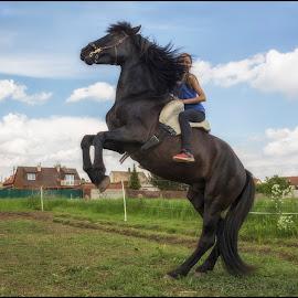 on horse by Jana Vondráčková - Uncategorized All Uncategorized