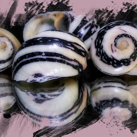 Shells 1 by Dave Walters - Typography Captioned Photos ( typography, macro, shells, nature, lumix fz2500, colors,  )