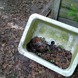 Old Farm Sink by Michelle Braxton - Novices Only Objects & Still Life ( left over, farm, old, reusable, sink,  )