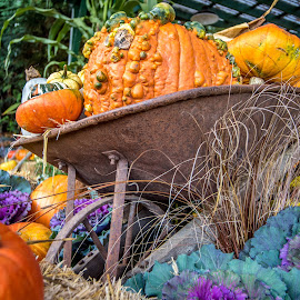 A Load of Fall by Darren Sutherland - Nature Up Close Gardens & Produce