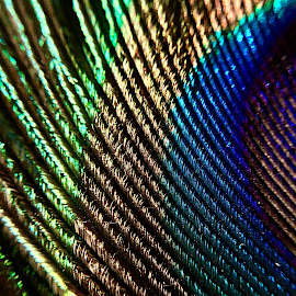Peacock feather by Arun Karanth - Abstract Patterns ( bird, nature, pattern, india, glowing, feathers, peacock )