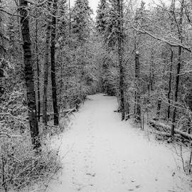 by Joseph Law - Black & White Landscapes