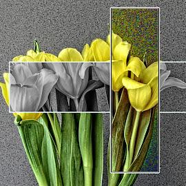Frame creation 03 by Michael Moore - Digital Art Things