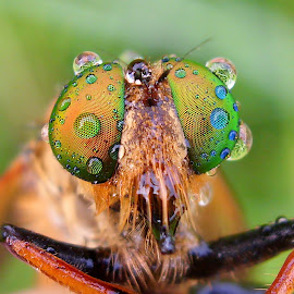 by Iwan Ramawan - Animals Insects & Spiders