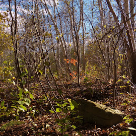 Growth by Gilman Michaud - Landscapes Forests