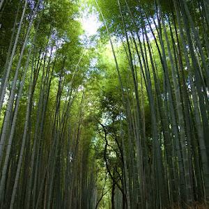 Bamboo_Groove_Arashiyama_Kyoto_Japan.jpg