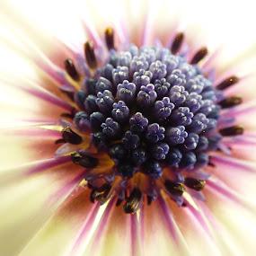 Flower bud by Nick Parker - Flowers Single Flower ( upclose, bud, makro, flower,  )