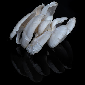 Zetas by Cristobal Garciaferro Rubio - Nature Up Close Mushrooms & Fungi ( mushroom, reflection, zetas, white zetas, white fungi )