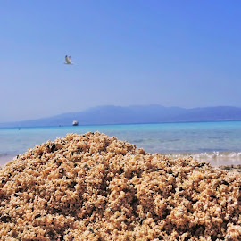 Summer mood by Nicoleta Gradinaru - Landscapes Beaches ( pink sand, seaside, beach )