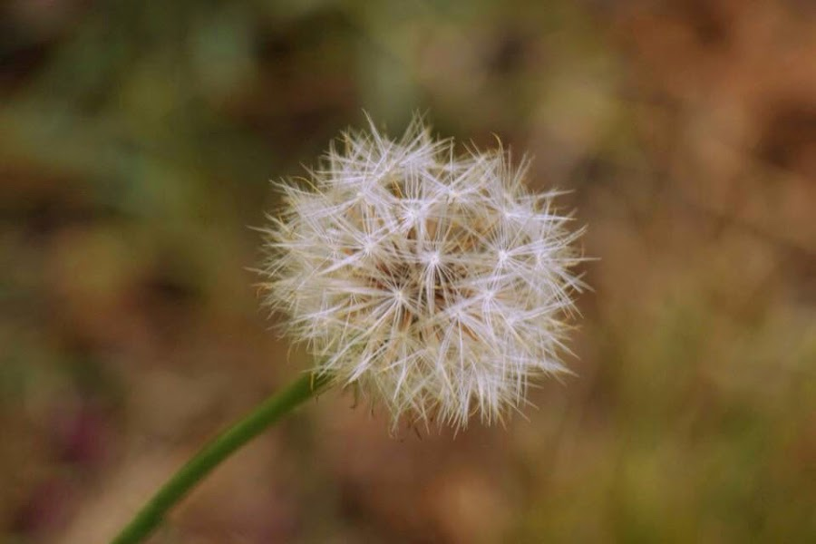 Make a wish by Amanda Daly - Novices Only Macro