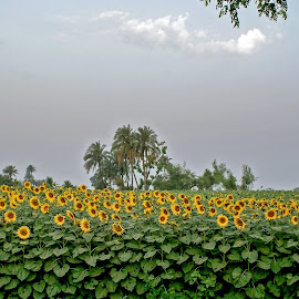 by Mohsin Raza - Flowers Flower Gardens (  )