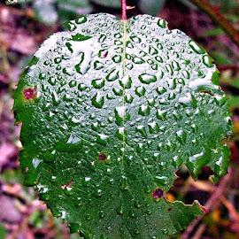 by Dragan Jovic - Nature Up Close Leaves & Grasses