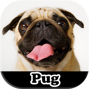 Download Meu Pug For PC Windows and Mac