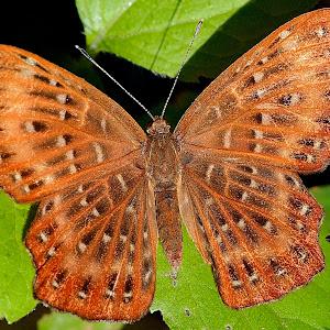 Dec 2 butterfly.jpg