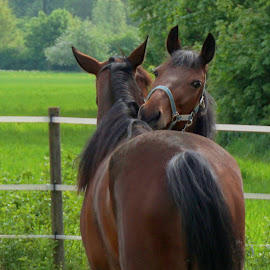 love is in the air by Yuriy Podoba - Animals Horses ( love, nature, pair, green, horse )