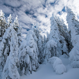 The wall by Marius Turc - Nature Up Close Trees & Bushes ( winter, snow, trees, frozen, wall )