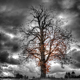 In Black and Fall by Jerry Kambeitz - Landscapes Prairies, Meadows & Fields ( orange, b&w, tree, color, fall )