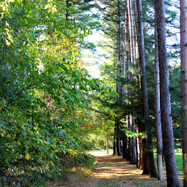 Tree lined path by Janet Smothers - City,  Street & Park  City Parks