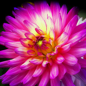 Vivid by Millieanne T - Flowers Single Flower