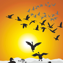 by Vladimir Ceresnak - Illustration Animals ( plant, migrating, animals, poultry, illustration, wildlife, scenic, birds, flock, drawing, flight, nature, season, fly, autumn, sunset, vector, fall, background, outdoors, silhouettes, group, geese, formation )