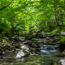 Fronda by Jared Stahl - Landscapes Mountains & Hills ( water, stream, peaceful, mountain, forest, quiet, landscape, spain, environment, nature, peaks of europe, bridge, stones, walk, rocks, river, renewal, green, trees, forests, natural, scenic, relaxing, meditation, the mood factory, mood, emotions, jade, revive, inspirational, earthly )