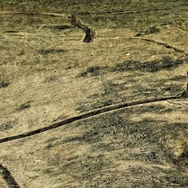 Mini landscape by HB Jansson - Abstract Macro ( abstract, sweden, höst, skog, macro, skåne, lund, dalby södferskog )