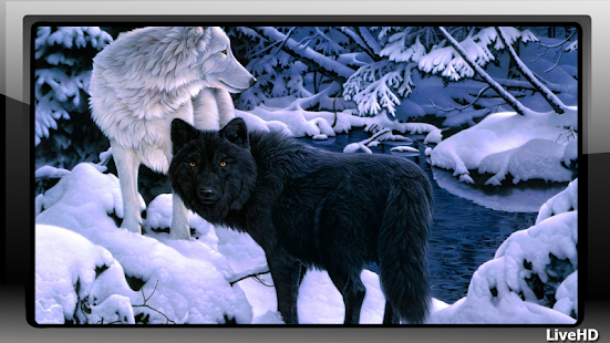 Black Wolf Wallpaper - screenshot