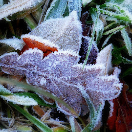 A touch of frost by Michelle Dimascio - Nature Up Close Leaves & Grasses ( nature, grass, ice, frost, leaf, leaves )