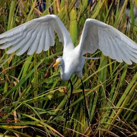 Bird 071 by Raphael RaCcoon - Animals Birds