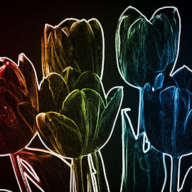 Tulips in the Abstract by Sherry Hallemeier - Digital Art Abstract ( black background, abstract, orange, bold, red, blue, green, colors, yellow, tulips, flowers, garden )