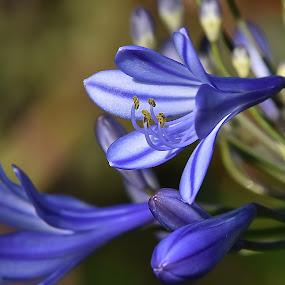 by Steven Aicinena - Flowers Flower Gardens (  )