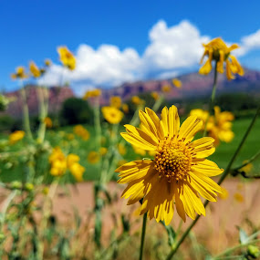 Beauty in beauty  by Michael Pruitt - Landscapes Prairies, Meadows & Fields ( arizona, sedona golf resort, sedona )