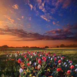 Peace of Mind by Phil Koch - Flowers Flower Gardens ( vertical, farmland, yellow, leaves, love, sky, tree, nature, autumn, perspective, flowers, light, orange, twilight, art, agriculture, horizon, portrait, environment, dawn, serene, trees, lines, wisconsin, natural light, ray, tulips, landscape, phil koch, spring, sun, photography, farm, horizons, clouds, office, park, green, scenic, morning, shadows, field, red, blue, sunset, amber, peace, meadow, summer, beam, earth, sunrise, garden )