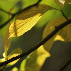 by Terry Linton - Nature Up Close Leaves & Grasses