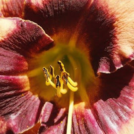 Day lilly by Jo Anne Keasler - Novices Only Flowers & Plants
