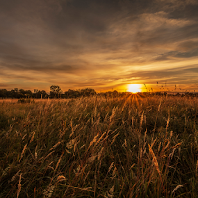 Sun Kissed Sunrise by Sandra Cockayne - Landscapes Sunsets & Sunrises ( countryside, golden fields, golden dawn, golden sunrise, english morning, sandi cockayne, golden field, english countryside, grasses, england, break of dawn, yorkshire, day break, pastoral, golden clouds, golden morning, fields, clouds, fields of gold, golden skies, grass, golden sky, golden sun, daybreak, morning, rural, skies, sunkissed morning, dawn, field of gold, sandra cockayne, yellow sunrise, golden grass, sunrise, english, sun kissed,  )