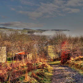 Home in the Highlands by Deborah Lister - Landscapes Forests ( colour, countryside, forests, farm, home, hills, scotland, croft, barn, mists, trees, landscape, rural )