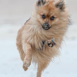beach run hugo  by Michael  M Sweeney - Animals - Dogs Puppies ( puppy, beach, michael m sweeney, run, nikon )