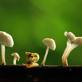 by Dwi Sudarmawan - Nature Up Close Mushrooms & Fungi ( mushroom, macro, snail )