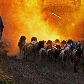 Shepherd by Abdul Rehman - Landscapes Sunsets & Sunrises ( pakistan, punjab, rural life, rural,  )